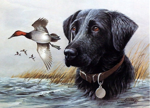 James Killen Black Lab -Canvasback