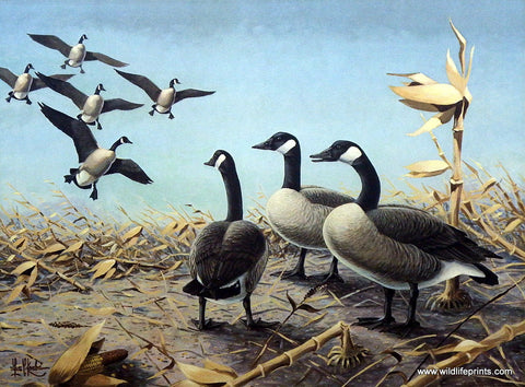 Les Kouba 1958-1959 Federal Duck Stamp Print