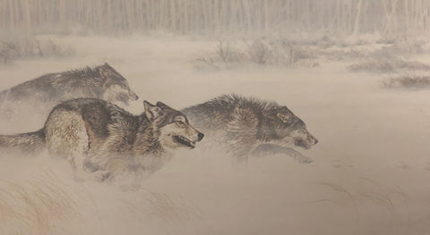 Guy Coheleach 30 Yards and Closing Fast Wolf Print
