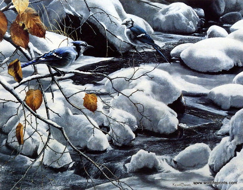 Kevin Daniel Adornment of Winter