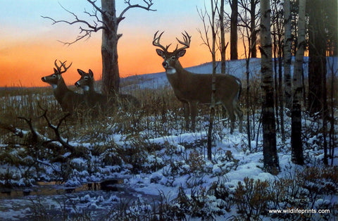 Whitetail Deer Print AFTER HOURS CLUB by artist Don Kloetzke