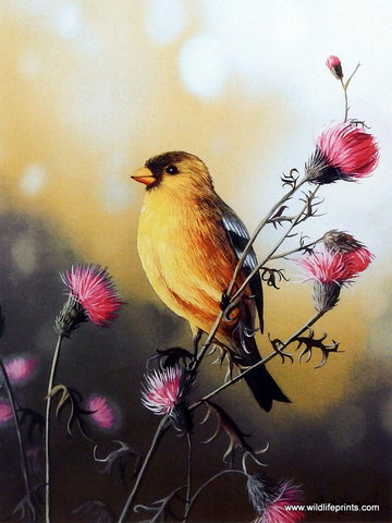Jim Hansel American Goldfinch