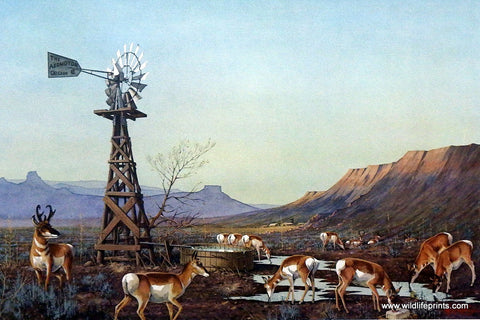 Les Kouba Pronghorn Print ANTELOPE IN RANCH COUNTRY