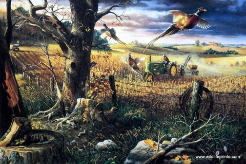 Charles Freitag John Deere tractor flushes out pheasants