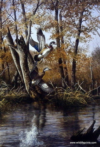 Richard Plasschaert Autumn Retreat