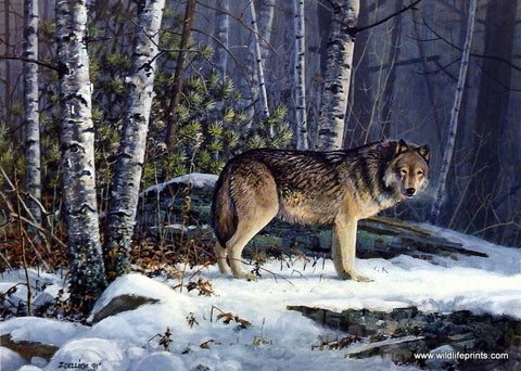 Scott Zoellick Aware Wolf