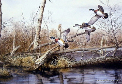 Richard Plasschaert Backwater Woodies