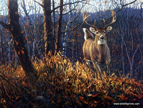 Bruce Miller Whitetail Buck Deer Art Painting Print BACKWOODS RUNNER