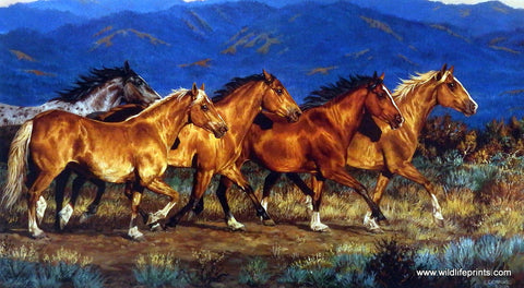 Chris Cummings Wild Horses Picture