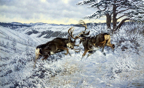 Michael Sieve Battling Bucks- Mule Deer