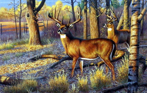 Cynthie Fisher Whitetail Deer Picture Beanfield Buck