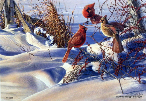 Al Agnew Cardinal Songbird Print BIRDS OF A FEATHER