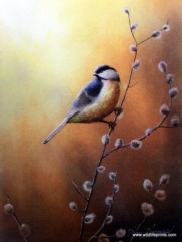 Jim Hansel Black Capped Chickadee