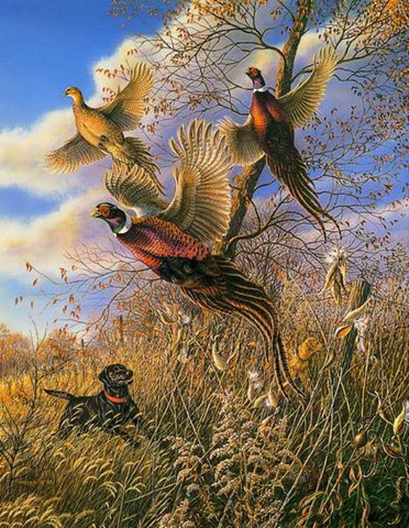 James Meger Black Jack Lab Pheasant Hunting Print