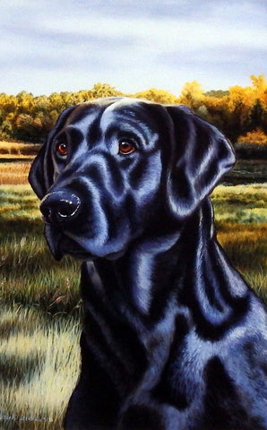 Michael Steddum Black Lab