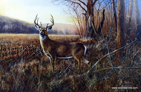 Jim Hansel Bluff Country Buck Wildlifeprints Com