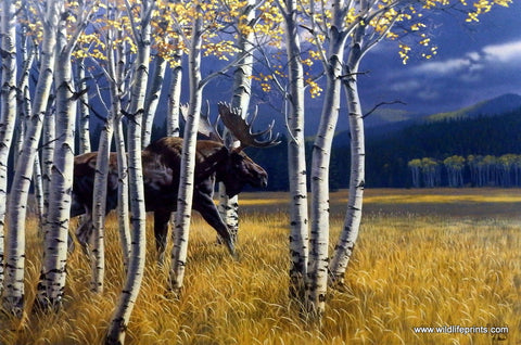 Al Agnew Moose Wildlife Art Print BREAKING COVER