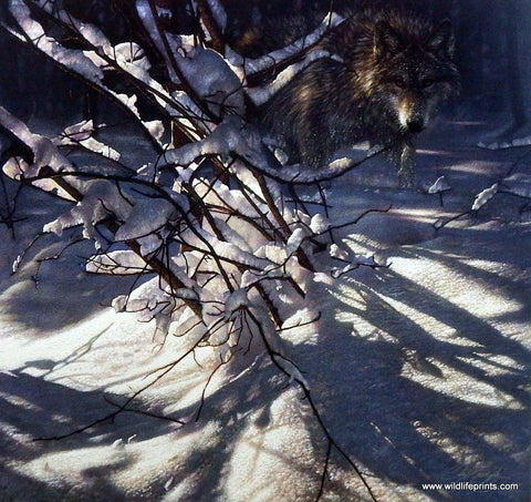 Collin Bogle Picture of a Wolf OUT OF DARKNESS