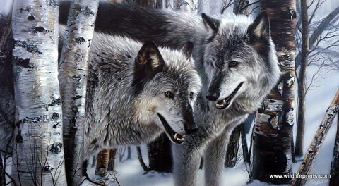 Collin Bogle Wolf Picture Winter Companions