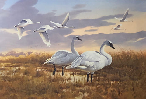 James Killen Call of the Wild Trumpeter Swan Art Print