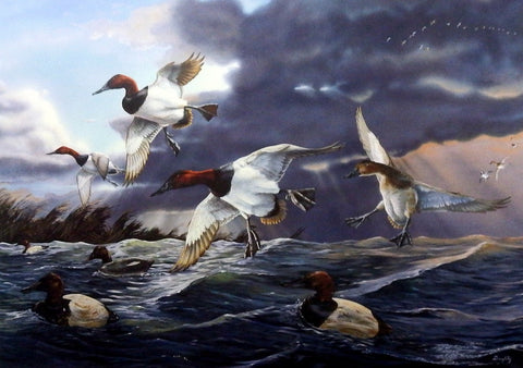 Terry Doughty Canvasback Memories