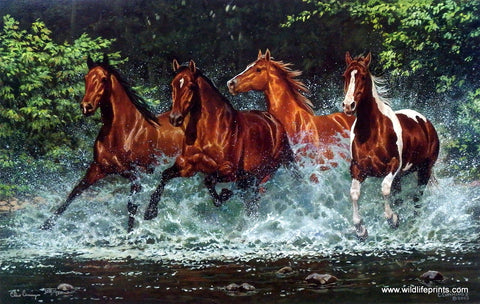 Chris Cummings Wild Horses Galloping Picture