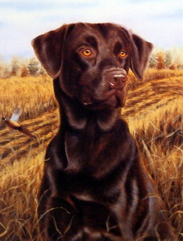 "Michael Steddum Chocolate Lab ""Brandy"""