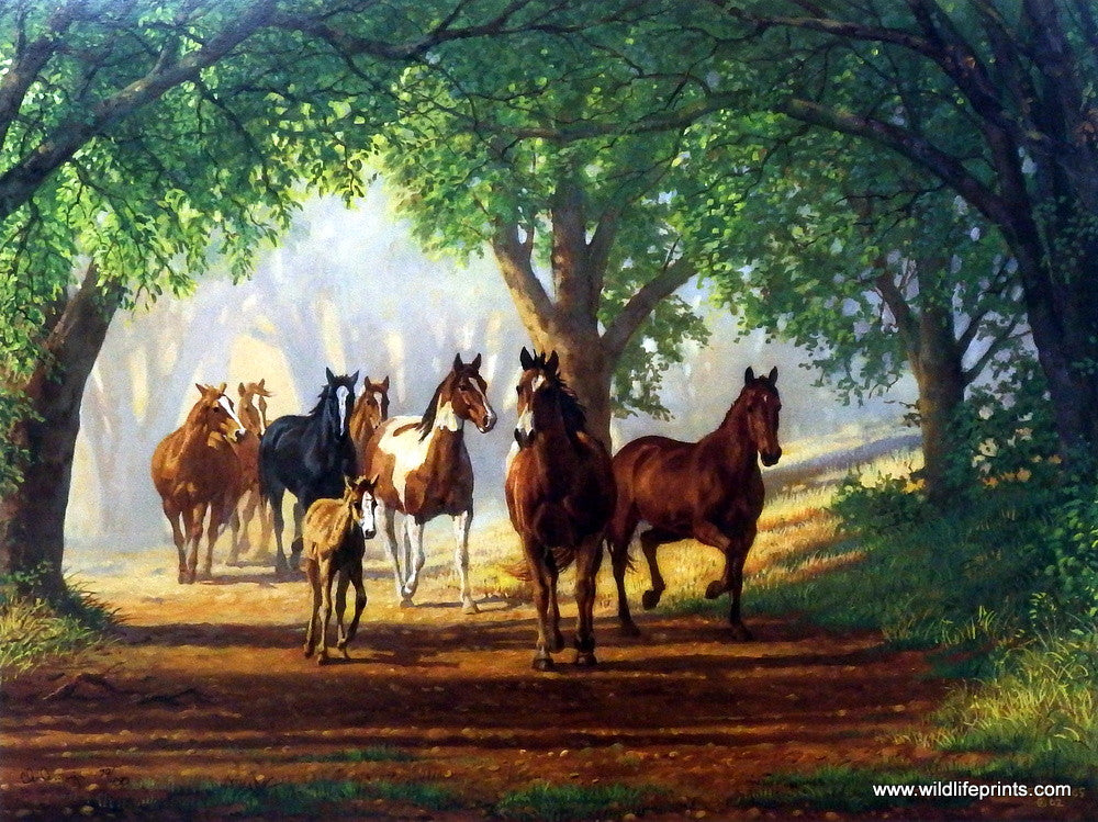 Artist Chris Cummings Unframed Horse And Colt Picture Country Lane Wildlifeprints Com