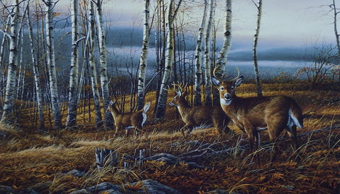 Terry Redlin Whitetail Deer Print THE BIRCH LINE