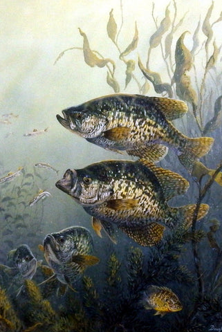 Terry Doughty Black Crappies