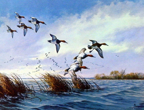 David Maass Ducks Flying Low