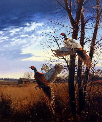 David Maass Evening Flight-Pheasants