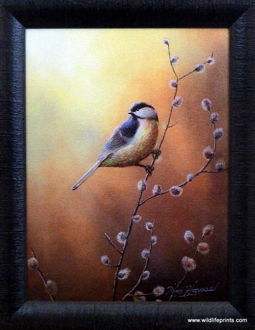Jim Hansel Black Capped Chickadee Studio Canvas Framed