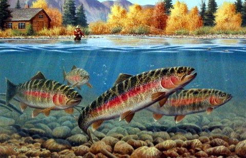 Cynthie Fisher Picture Fall Fly Fishing Rainbow Trout
