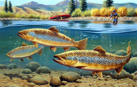 Cynthie Fisher Trout Fishing Picture Morning Browns