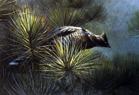 Don kloetzke Jack Pine Grouse