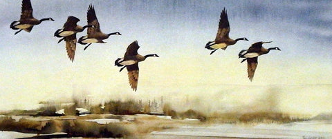 Mike Capser Canadian Passage Goose Print