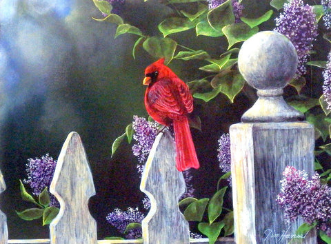 "Jim Hansel Birds Eye View Cardinal Print 16"" x 12"""