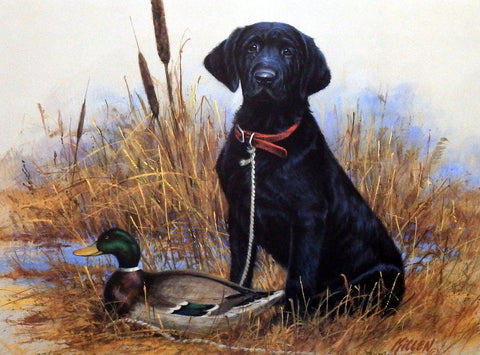 James Killen Great Beginnings Black Lab