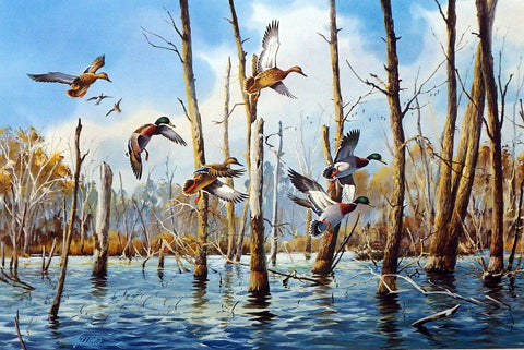 James Killen Flooded Timber Mallards
