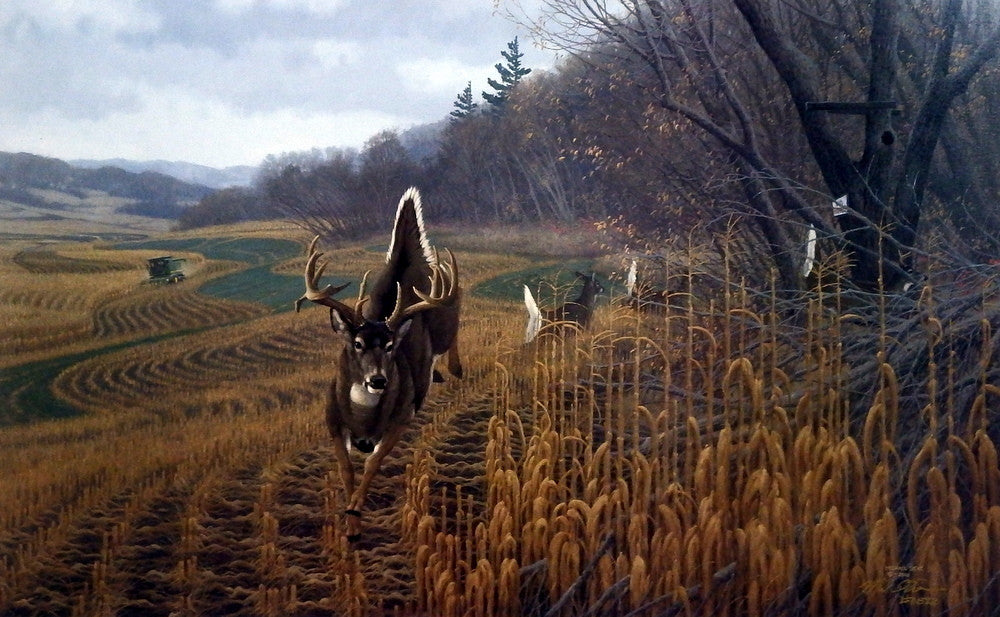Michael Sieve Deer Country Wildlifeprints Com
