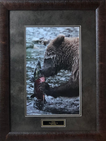 Judy Syring Dinner Grizzly Bear Photography Art Print-Framed 19 x 25