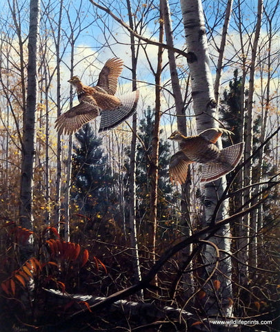 David Maass Evening Flight- Ruffed Grouse