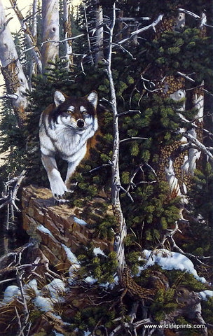 Derk Hansen Eyes Of The Wild II-Wolf