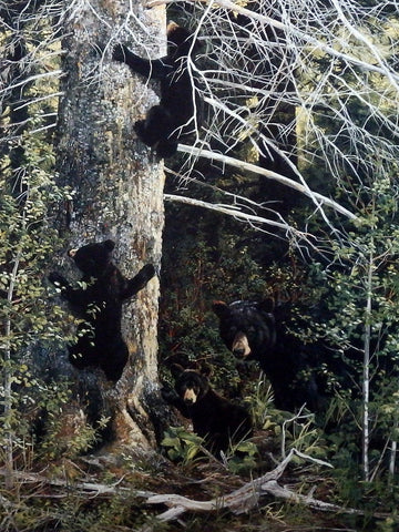 Andrew Kiss Black Bear Cubs Art Print