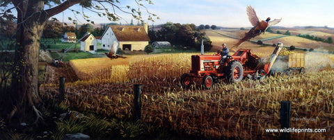 Charles Freitag Pheasant Print International Harvester Tractor Corn Field