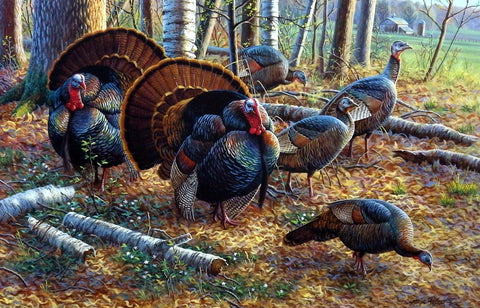 Cynthie Fisher Wild Turkey Picture SPRING STRUT