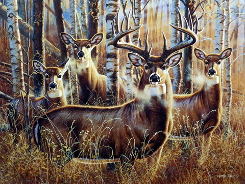 Cynthie Fisher Deer Picture SUDDEN ENCOUNTERS