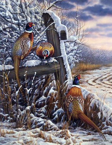 Rosemary Millette Forgotten Fenceline- Pheasants