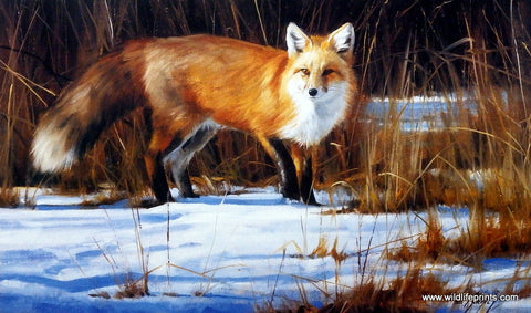 Edward Aldrich Fox on the Run